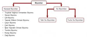 Şema 1.3: Başlıca biyomlar