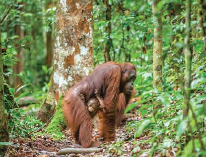 Fotoğraf 1.10 Tropikal yağmur ormanları biyomu