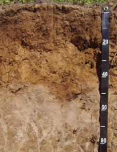 Fotoğraf 1.153 Toprağın üst katmanlarından taşınan tuz ve kireçler, alt katmanlarda birikir.
