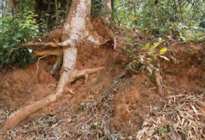 Fotoğraf 1.158 Kahverengi orman toprağı