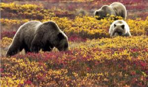 Fotoğraf 1.17 Tundra biyomu