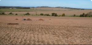 Fotoğraf 1.170 Kestane rengi bozkır toprağı