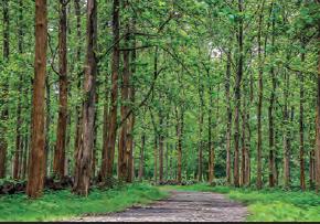 Fotoğraf 1.183 Muson ormanı