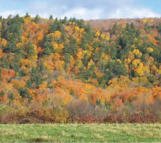 Fotoğraf 1.184 Karışık yapraklı ormanlar
