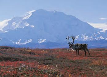Fotoğraf 1.192 Tundra