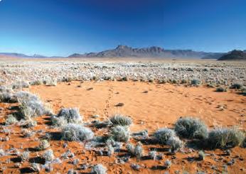 Fotoğraf 1.193 Çöl bitkilerinden bir görünüm