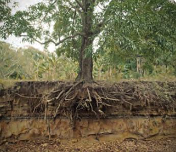 Fotoğraf 1.197 Bitkiler gerekli mineralleri ve su ihtiyaçlarını kökleriyle alır.