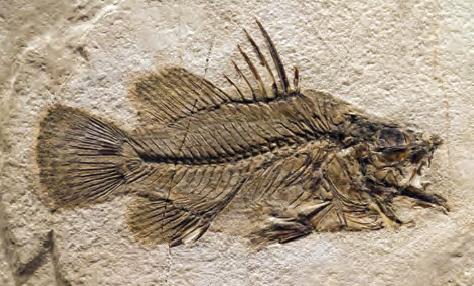 Fotoğraf 1.2 Fosiller jeolojik zamanların tanıklarıdır.