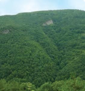 Fotoğraf 1.200 Kuzey Anadolu ormanlarından bir görünüm