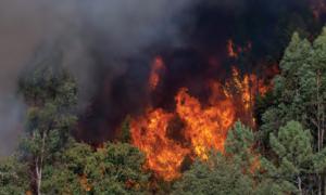 Fotoğraf 1.22 Orman yangını, hem oksijeni hem de oksijen üreten ağaçları azaltmaktadır.