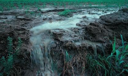 Fotoğraf 1.23 Tarlalara atılan azotlu gübre yağışlarla su kaynaklarına karışmaktadır.