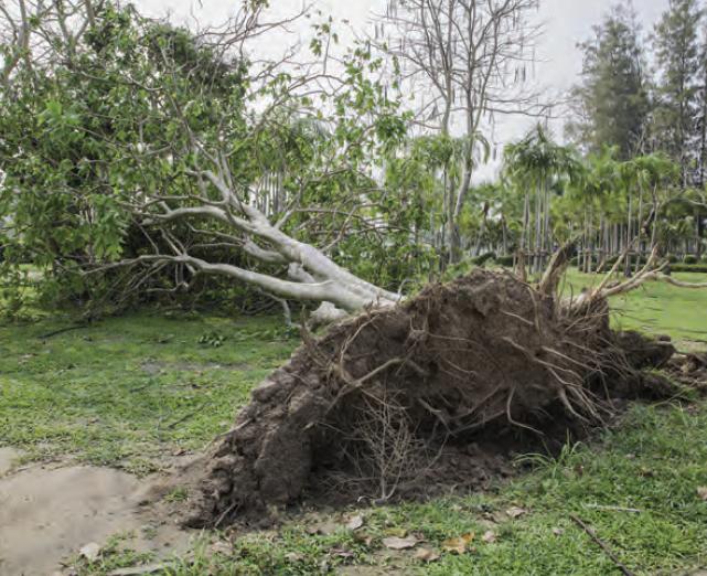 Fotoğraf 1.5.10 Fırtınalar, bazen ağaçları kökünden sökebilmektedir.