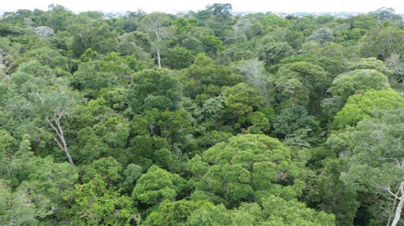 Fotoğraf 1.5.20 Ekvatoral yağmur ormanları