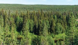 Fotoğraf 1.5.27 Tayga ormanlarından bir görünüm