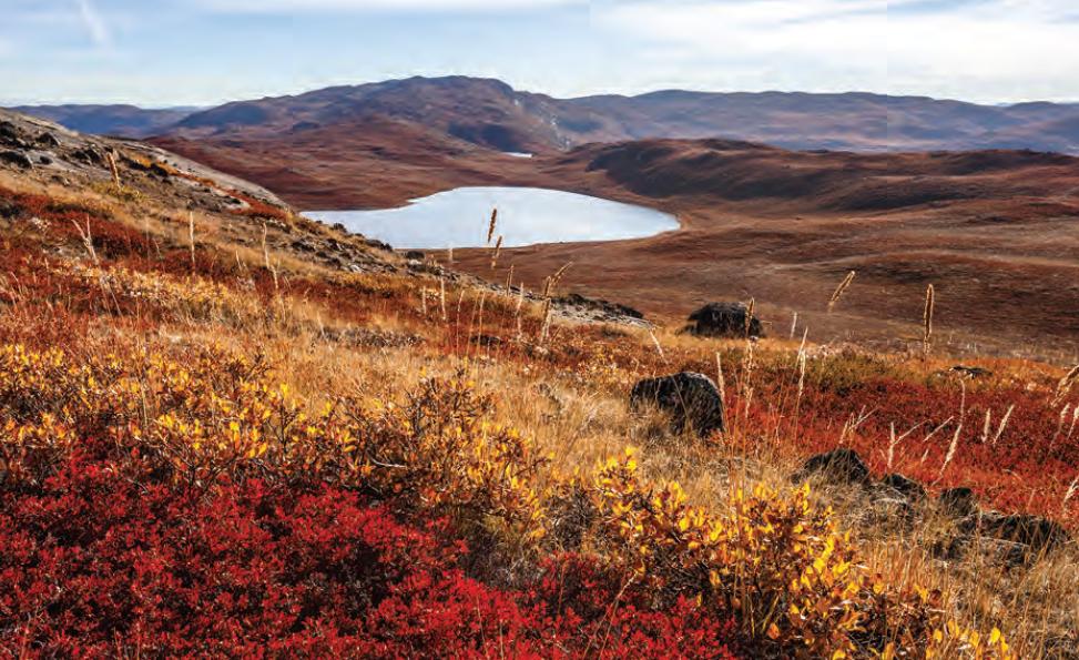 Fotoğraf 1.5.28 Tundra bitki örtüsü