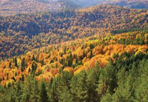 Fotoğraf 1.5.35 Karadeniz iklim bölgesinde ormanlar geniş yer kaplar.