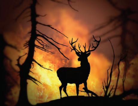 Fotoğraf 1.8 Orman yangınları sonucunda biyoçeşitlilik azalmaktadır.