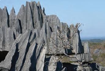Fotoğraf 1.85 Lapya (Madagaskar)
