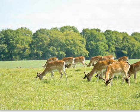 Fotoğraf 1.9 Bazı hayvanlar belirli alanlarda aşırı otlayarak bitki örtüsüne zarar vermektedir.