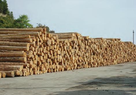 Fotoğraf 2.100 Ormanlarımızdan elde edilen tomruklardan bir görünüm (Ayancık, Sinop)