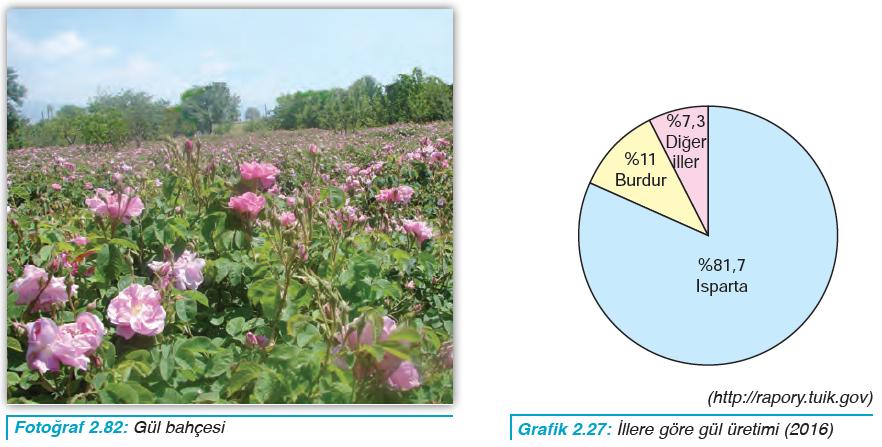 Fotoğraf 2.82 Gül bahçesi - Grafik 2.27 İllere göre gül üretimi (2016)