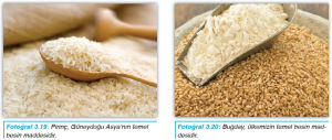 Fotoğraf 3.19 Pirinç, Güneydoğu Asya'nın temel besin maddesidir. - Fotoğraf 3.20 Buğday, ülkemizin temel besin maddesidir.