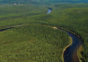 Fotoğraf 3.2 Tayga orman bölgesinden bir görünüm