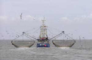 Fotoğraf 3.36 Bazı denizler, önemli balık üretim alanlarıdır.
