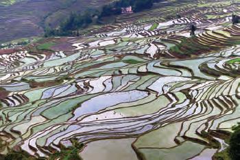 Fotoğraf 3.5 Çin tarım bölgesinden bir görünüm