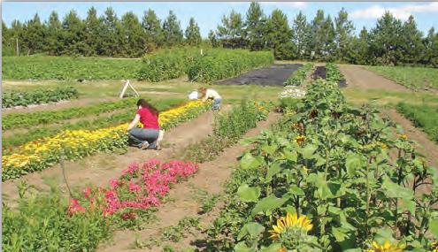 Fotoğraf 3.57 Danimarka, organik tarım bakımından gelişmiş bir ülkedir.