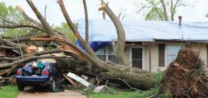 Fotoğraf 4.14 Fırtına bazen ağaçları kökünden sökebilmektedir.