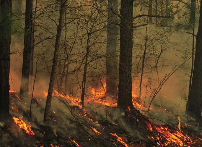 Fotoğraf 4.15 Orman yangınları sonucu bir ekosistem yok olmaktadır.