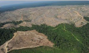 Fotoğraf 4.22 Endonezya'da orman tahribatı