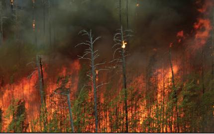 Fotoğraf 4.28 Orman yangınları ekolojik açıdan da önemli bir afettir.