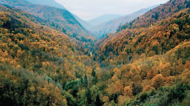 Fotoğraf 4.29 Ormanların korunması da Zonguldak, Bartın ve Karabük Projesi'nin hedeflerindendir.