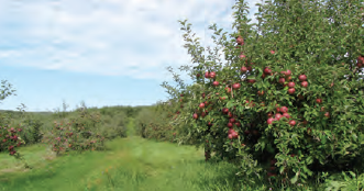 Fotoğraf 4.35 Elmalı Ovası'nda elma bahçeleri