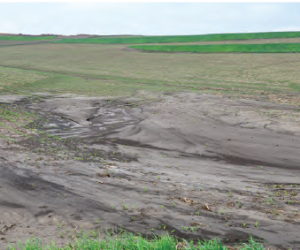 Fotoğraf 4.7 Erozyon sonucu verimli topraklar yok olmaktadır.
