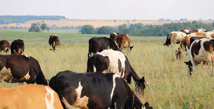Görsel 2.8 Bölgede hayvancılık daha çok meralarda yapılmaktadır.