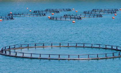 Görsel 2.9 Barajlarda yapılan kültür balıkçılığı