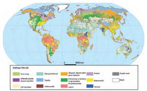 Harita 1.25 Yeryüzündeki başlıca toprak tipleri