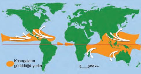 Harita 4.4 Yeryüzünde kasırgaların dağılışı (Oklar kasırga yönünü göstermektedir.)
